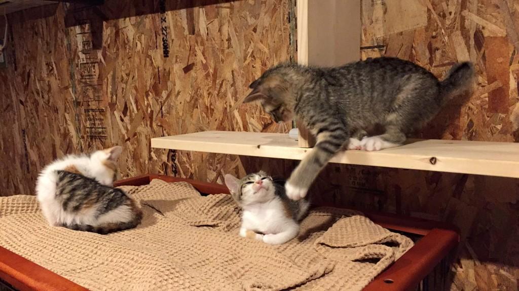 猫庭の中でじゃれあう猫ちゃんたち。癒されます。
